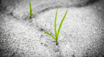 Cesty k řešení environmentální krize